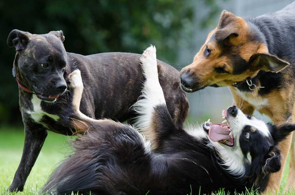 Quali animali e per quale scopo