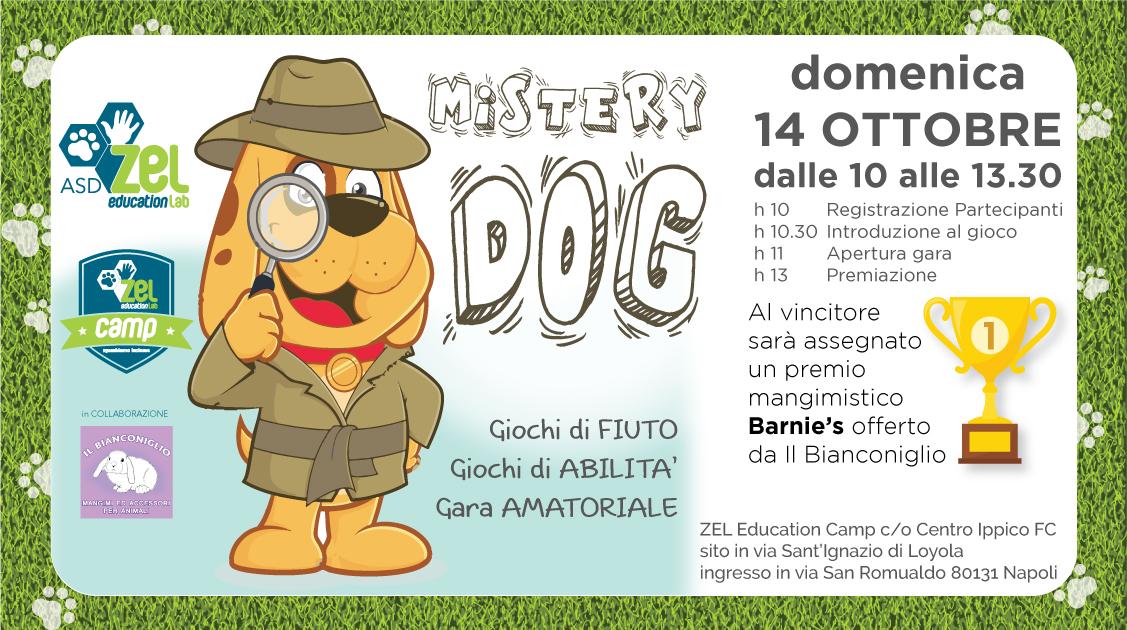 Mistery DOG